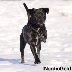 Jak dbać o psa zimą: łapy psa