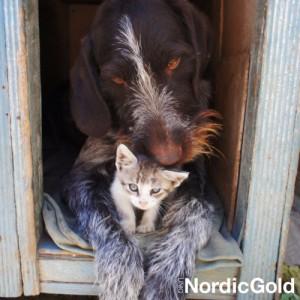 Jak dbać o psa zimą: buda