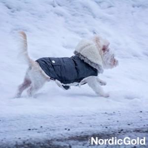 Jak dbać o psa zimą: psia moda