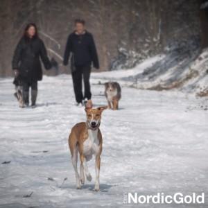 Jak dbać o psa zimą: spacery