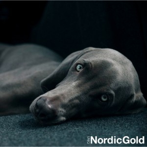 Stres u psa