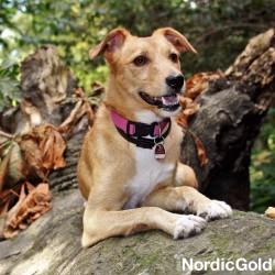 bezpieczeństwo psa na spacerze: adresowka dla psa