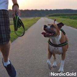 bezpieczeństwo psa na spacerze: odblaski dla psa