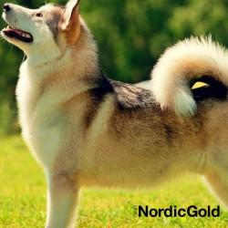 Jak okazywać psu miłość: pielegnacja psa