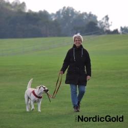 Jak okazywać psu miłość: szkolenie psa