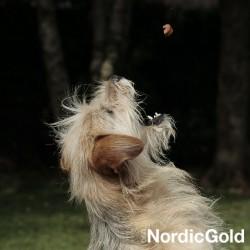 Spacer z psem: smakołyk