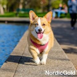 wycieczka rowerowa z psem: szelki dla psa