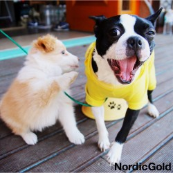 Spacer z psem: wyposarzenie psa