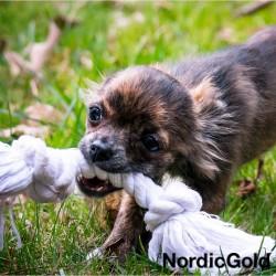 Spacer z psem: zabawki psa na spacerze