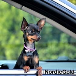 podróż z psem: adresówka