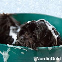 sekret błyszczącej sierści psa: kąpiel