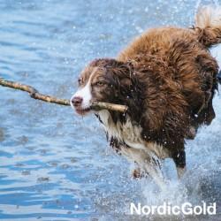 plan dnia twojego psa: aktywny pies