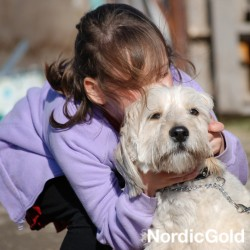 10 powodów, dla których warto mieć psa: pies rodzinny