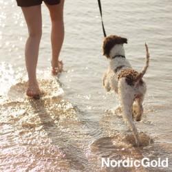 10 powodów dla których warto szkolić psa: plan dnia