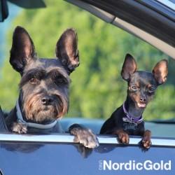 10 powodów dla których warto zacząć szkolenie psa: socjalizacja