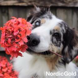 10 powodów dla których warto szkolić psa: sztuczki