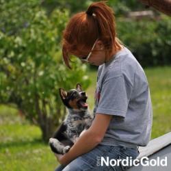 10 powodów dla których warto szkolić psa: współpraca