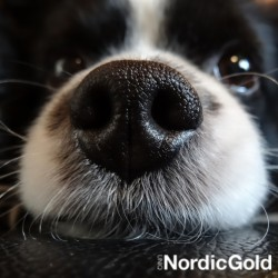 10 powodów, dla których warto mieć psa: zimny nos