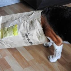 Borys (4 lata) Beagle