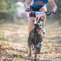 Jazda na rowerze z psem