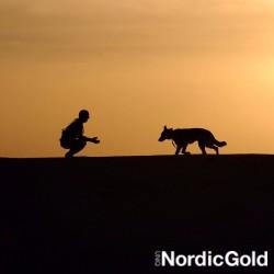 Wieczorne spacery z psem