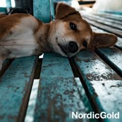 Jak pomóc psu w upalne dni: odpoczynek
