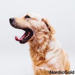 3 najlepsze rasy psa dla rodziny golden retriever