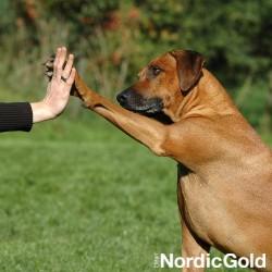 Pies podaje piątke