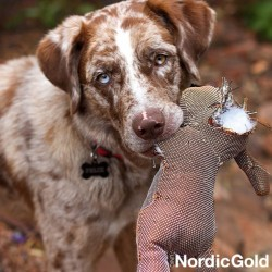 zabawki dla psa - Pluszaki dla psa