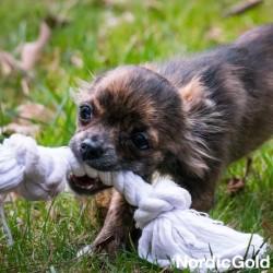 zabawki dla psa - Szarpaki dla psa