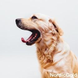 Ziewanie jako objaw stresu u psa