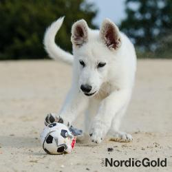 aktywność psa