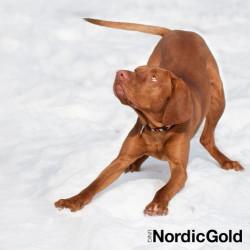 sygnały uspokajające psa
