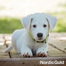 sygnały uspokajające u psów