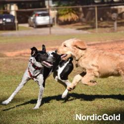 sygnały uspokajające psów
