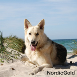 pies nad morzem