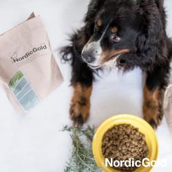 karma dla psa seniora
