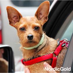 Pies w samochodzie - bezpieczny pies