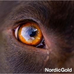 wzrok psa