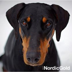 psy wyczuwają raka
