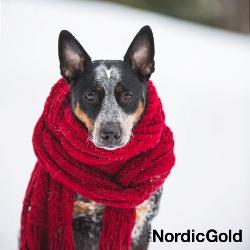 dieta psa zimą